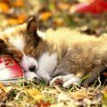 Descubre por qué es tan importante que tu mascota duerma bien
