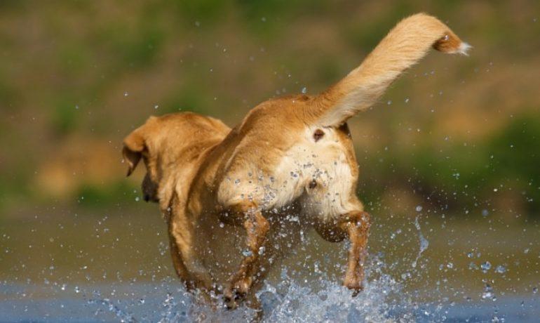 ERC da marcha atrás y votará en contra de cortar el rabo a los perros