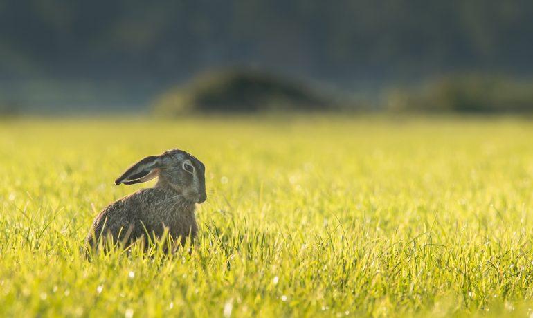 El conejo como mascota