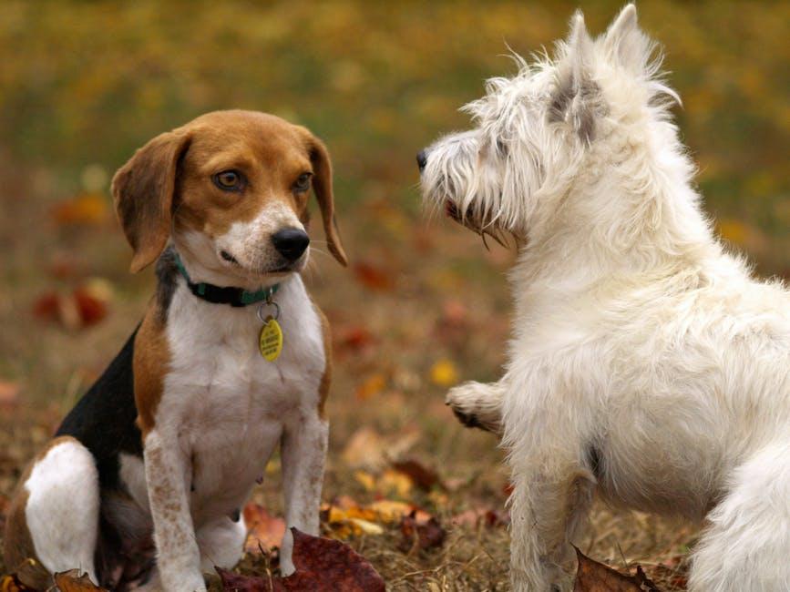 El paseo de los perros, oportunidad de socialización