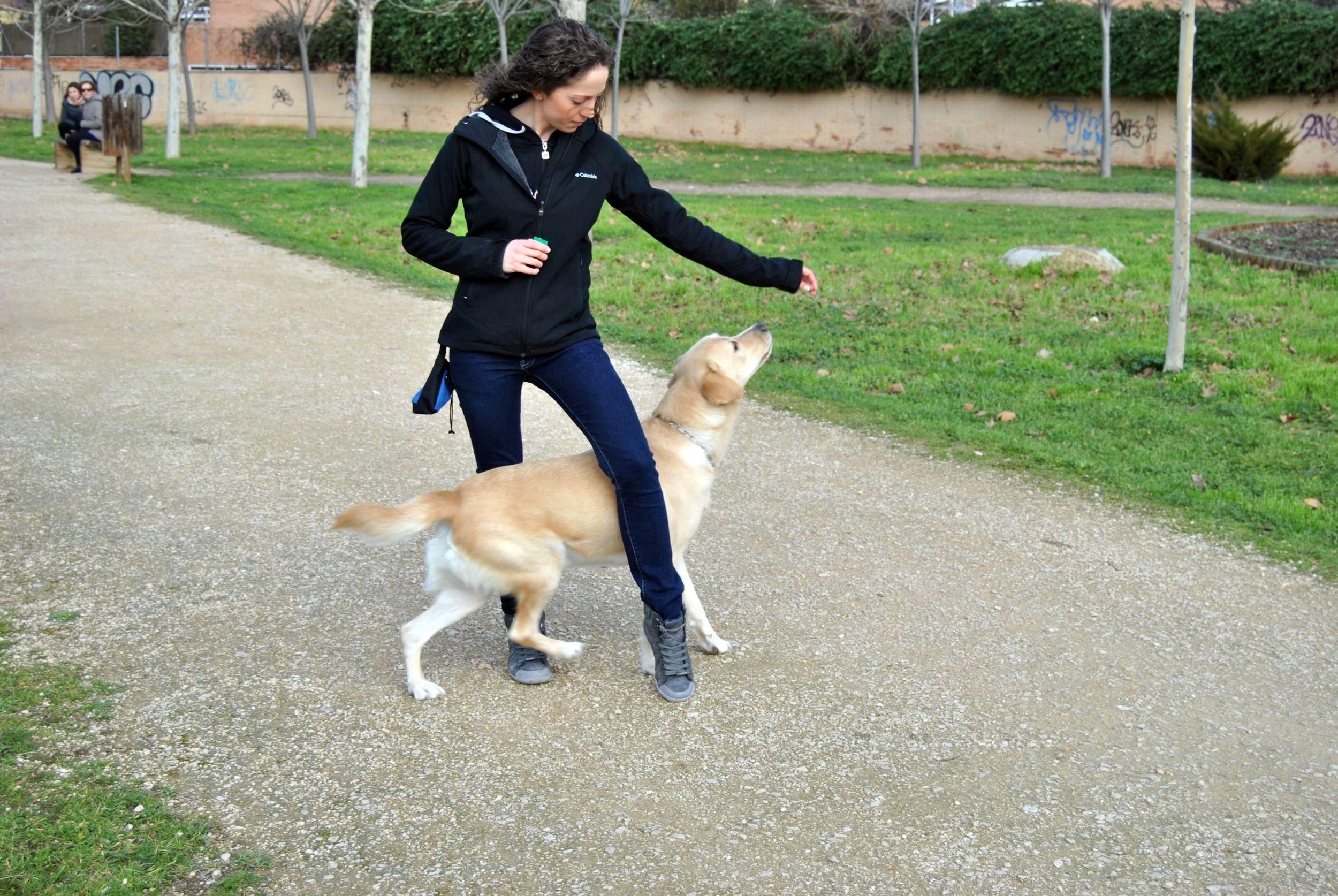 Entrenar a mi perro sin clicker