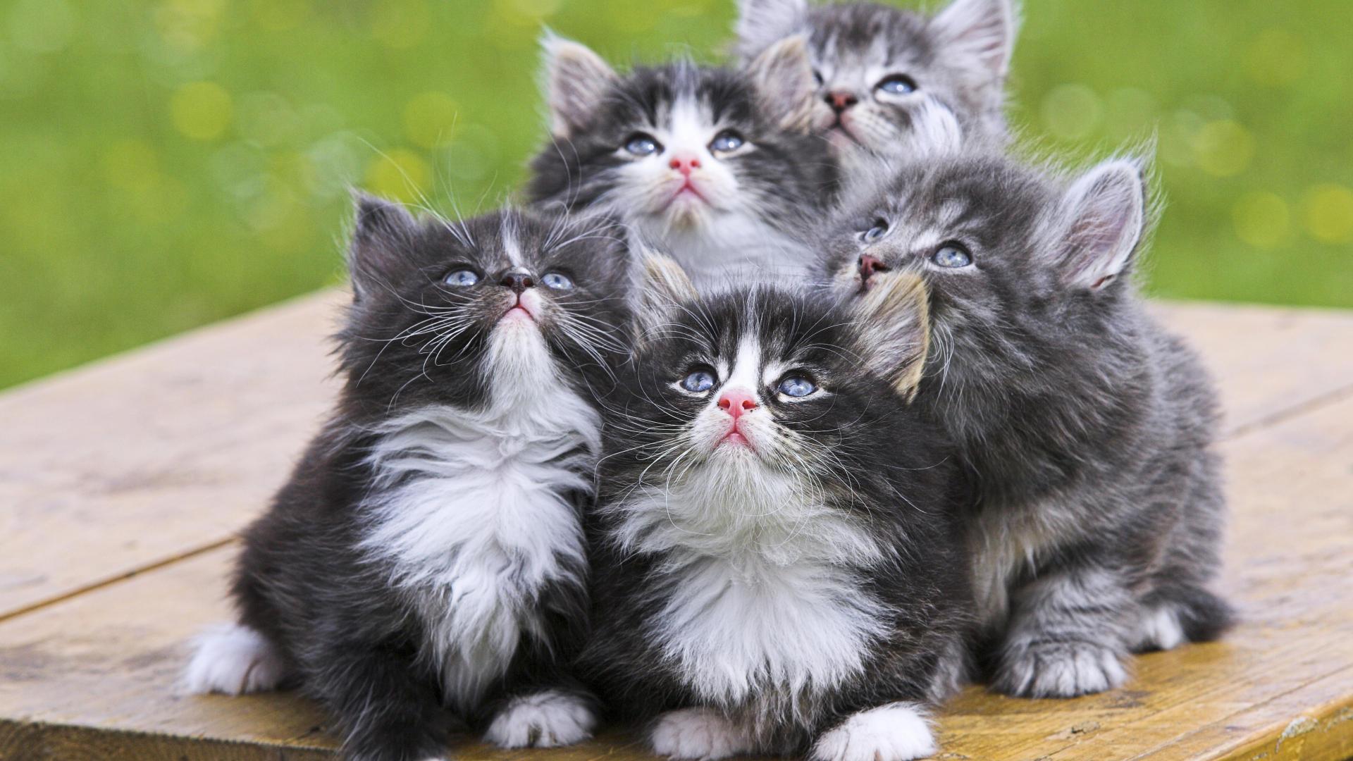 La salud del gato persa