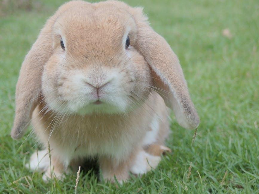 La vida con un conejo como mascota