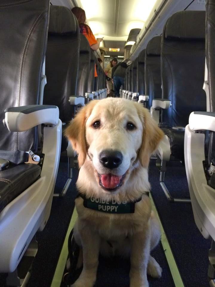 Las companías low cost aceptan mascotas