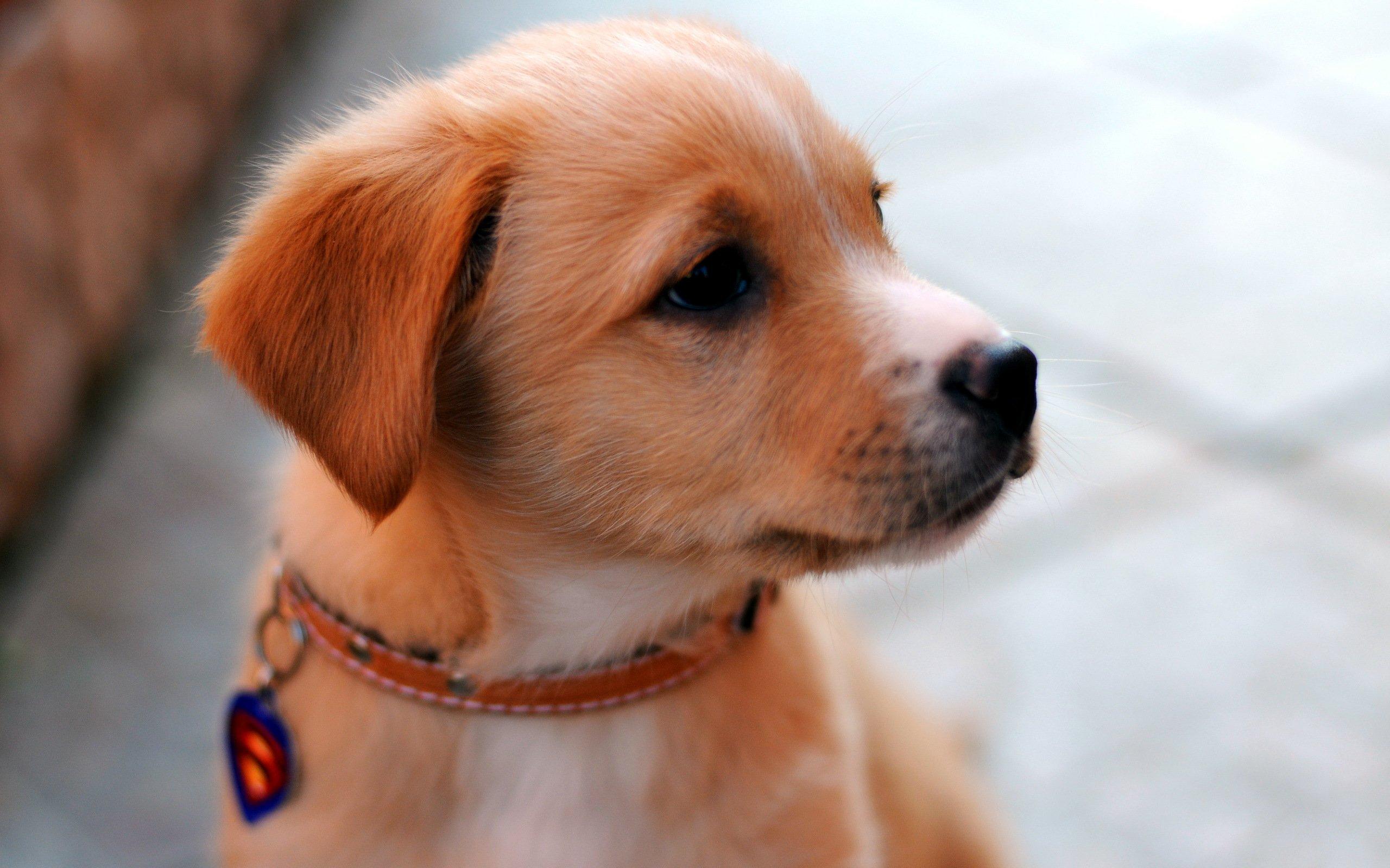 Los perros pueden comer canela