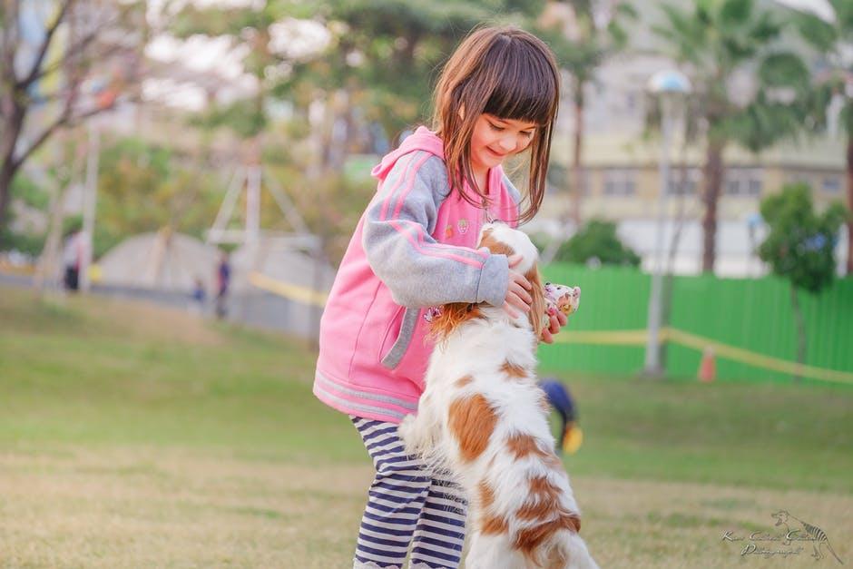 por que a los perros se les eriza el lomo