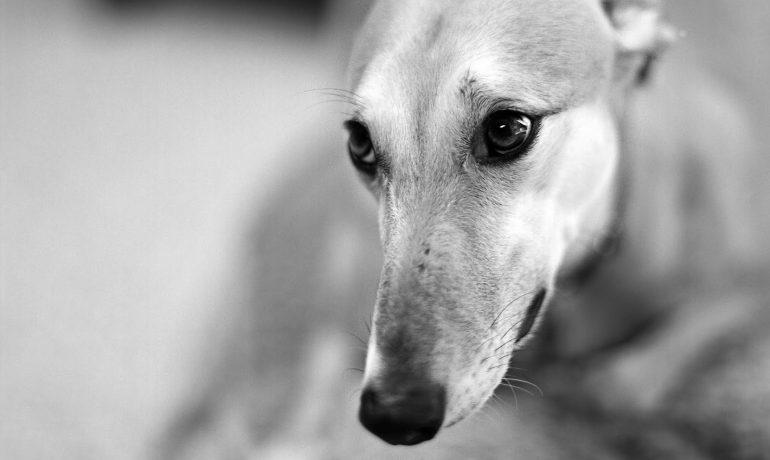 PP y ERC consiguen que amputar el rabo a los perros siga siendo legal