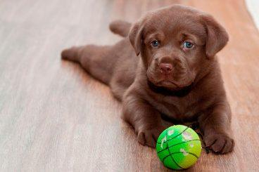 Parásitos más comunes en los perros y cómo prevenirlos