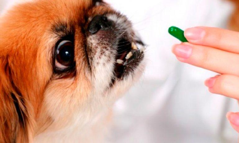 Pautas para la desparasitación canina