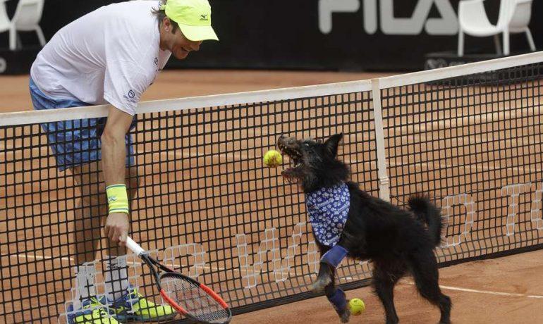 Perros abandonados son los recogepelotas del Abierto de Tenis en Brasil