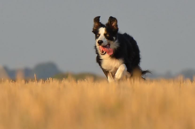 Por qué mi perro se escapa