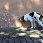 Por qué se huelen los perros