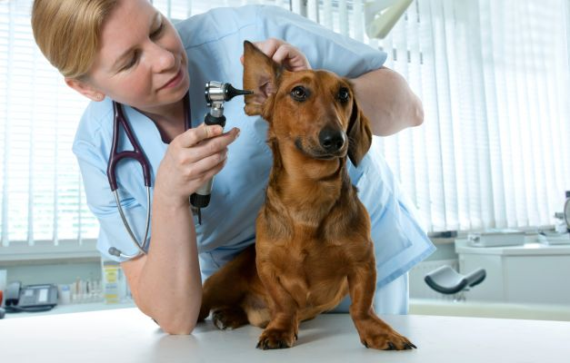 Preguntas básicas para un veterinario
