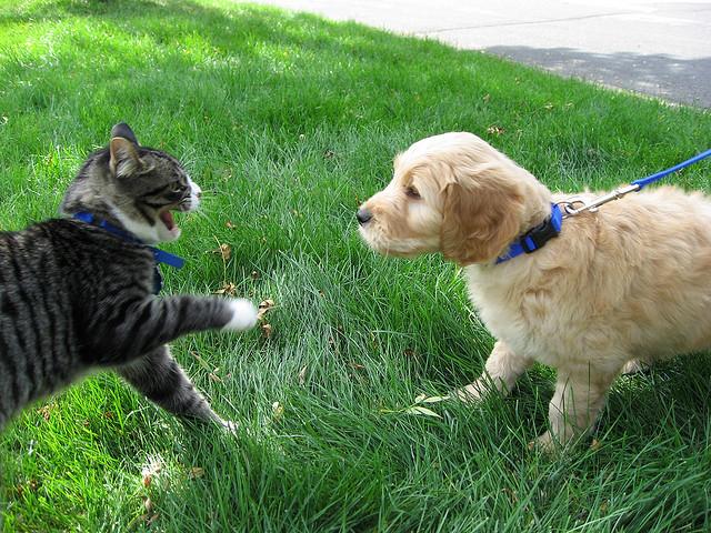 Consejos para mejorar la convivencia entre perros y gatos