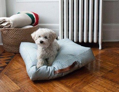 Prevención de la filariosis canina