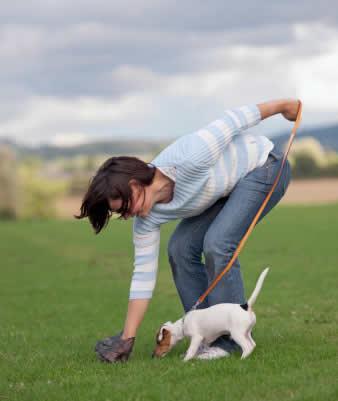 Pruebas de ADN para identificar las cacas de los perros y evitar su abandono