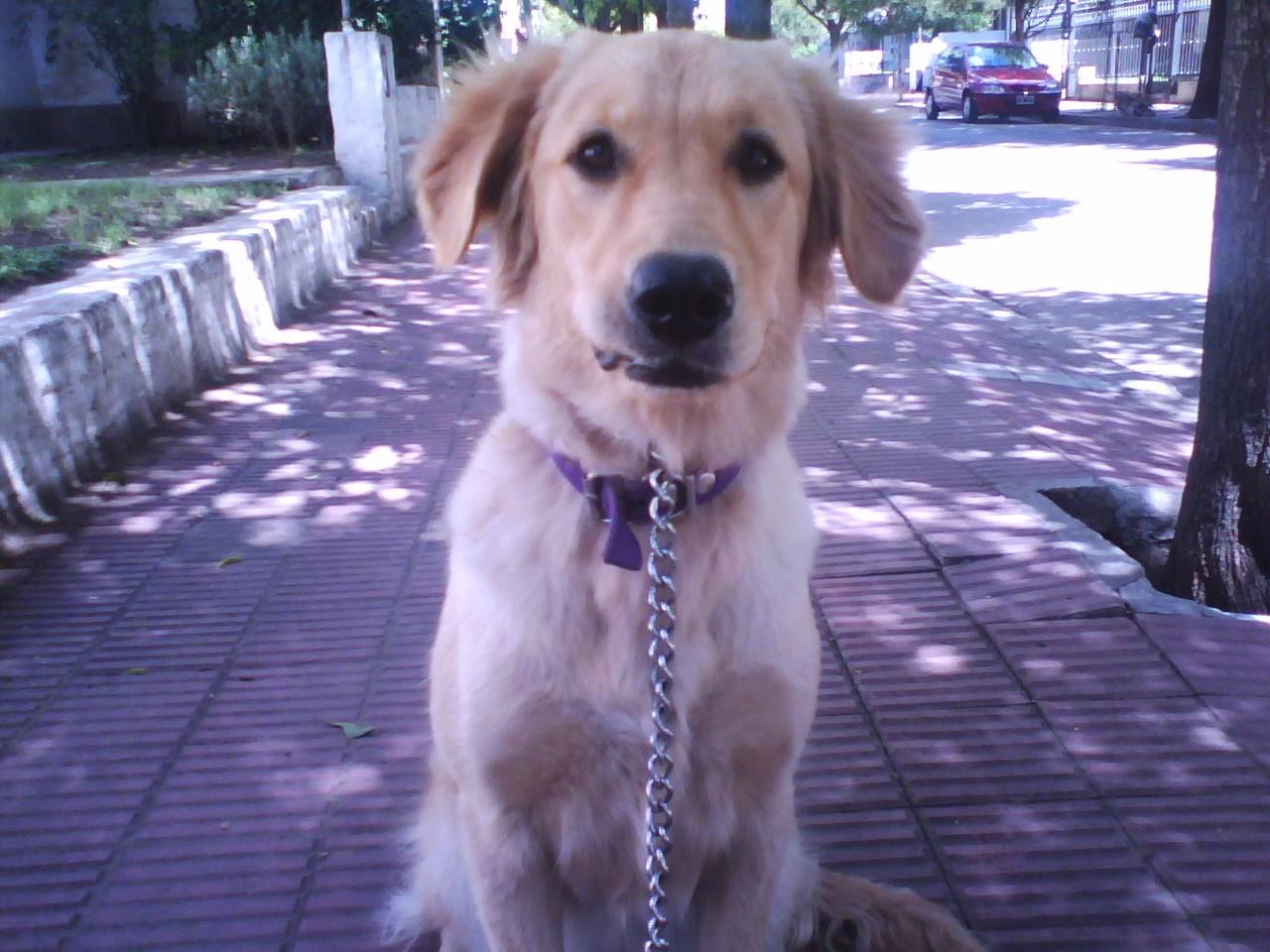 Qué es la amiloidosis canina