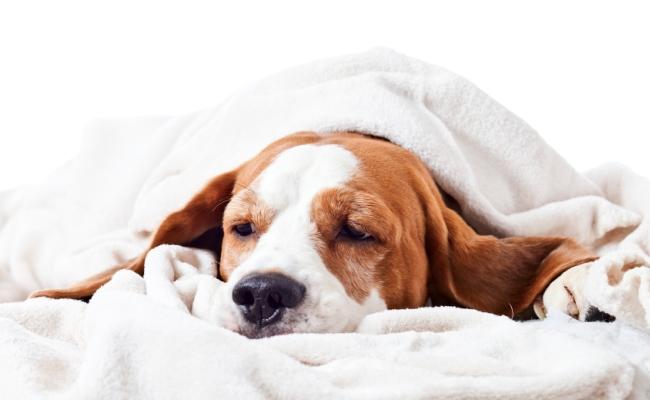 Qué precauciones tomar si tu perro tiene diarrea y es cachorro