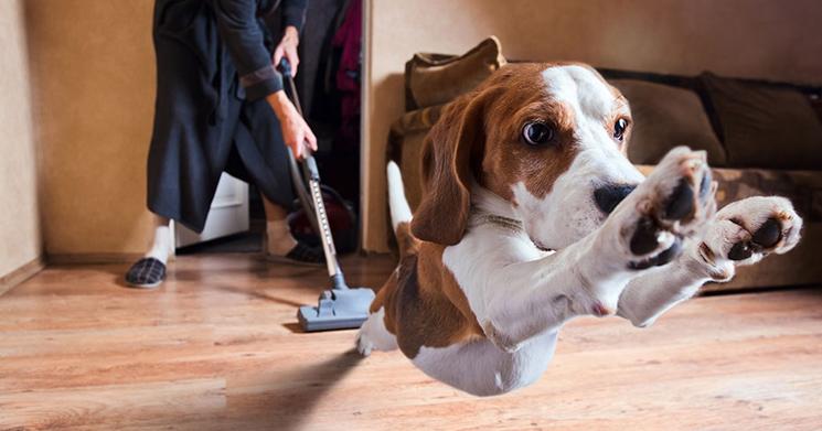 Qué conductas son y no son agresivas en un cachorro