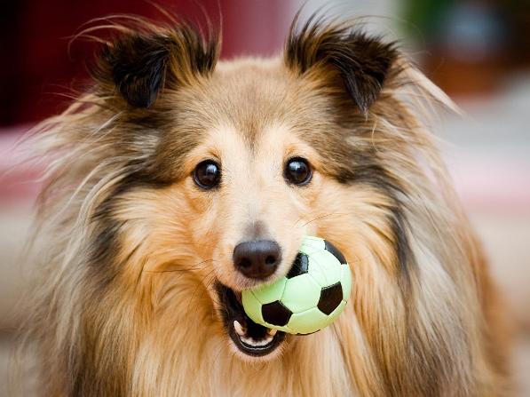 Súper alimentos que refuerzan la salud de tu perro