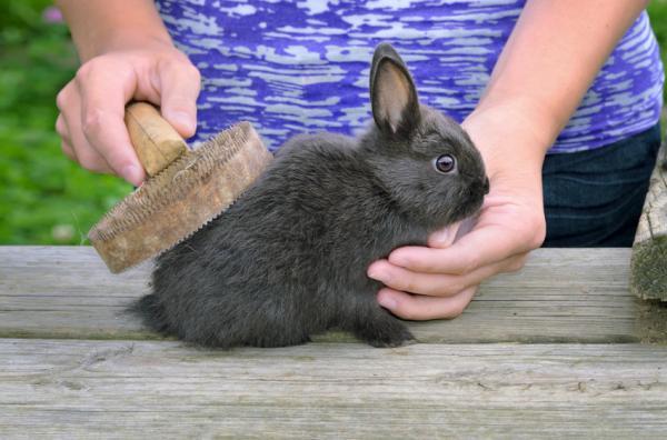 Si a mi conejo se le cae el pelo