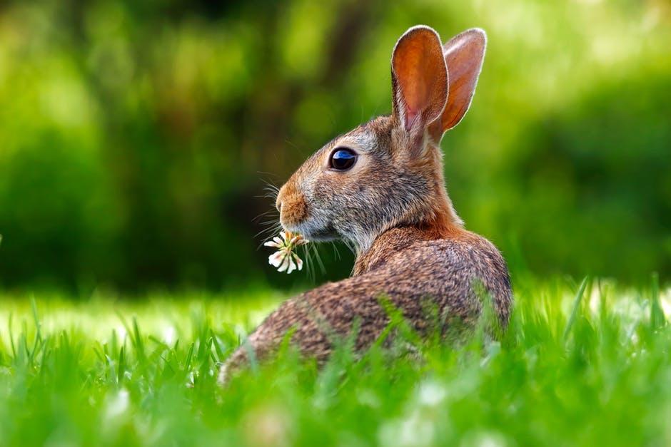 Cuidados que necesitan los conejos