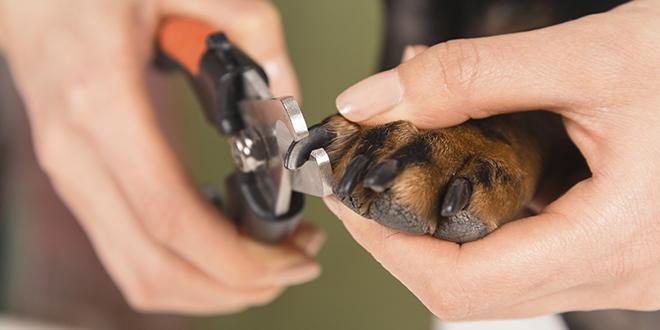 Todos los perros necesitan corte de uñas