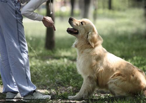 Tu perro te ve como líder