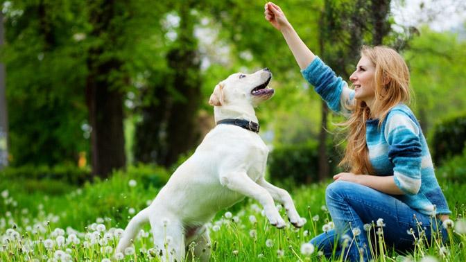 Un perro anciano puede aprender igual que uno joven