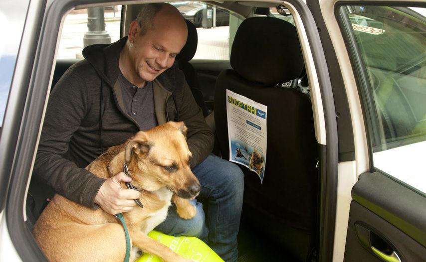 Un taxista rebaja el viaje a quienes adopten un perro de la perrera