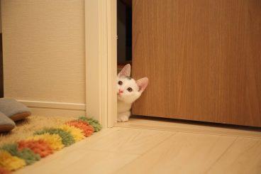 adiestrar a un gato