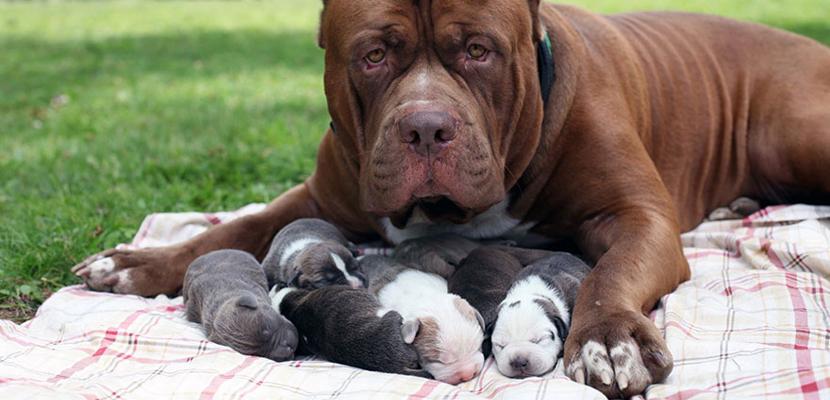 Alimentación del perro desde el nacimiento hasta el destete