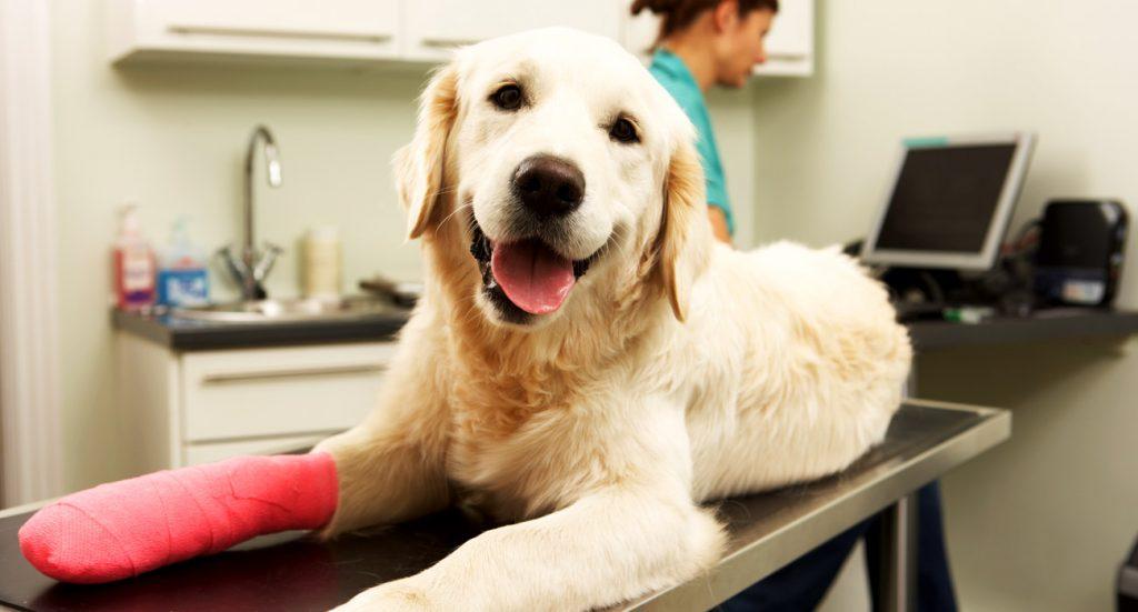 botiquín de primeros auxilios para mascotas