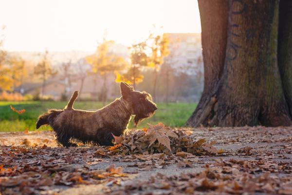 Cómo evito que mi perro coma cosas del suelo