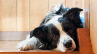 Cómo prevenir el hiperapego en perros