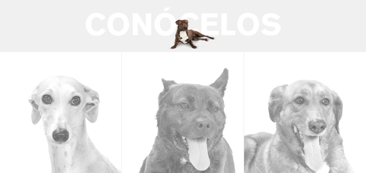 Perros con historias reales que necesitan una familia