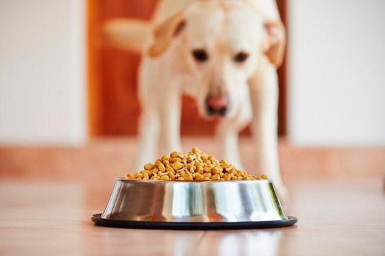 Consejos para alimentar bien a tu mascota