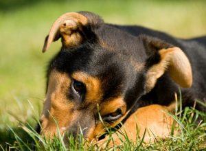 Consejos para evitar que mi perro coma cosas del suelo