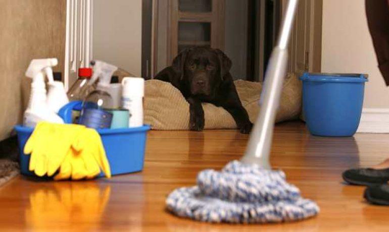 Consejos para mantener limpia una casa con mascota
