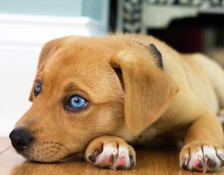 desparasitación canina interna