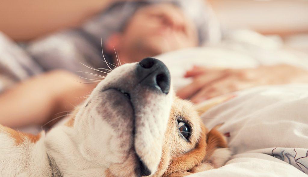 Dormir con tu perro es tu decisión