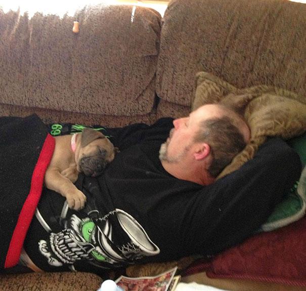 el perro no puede subir al sofa