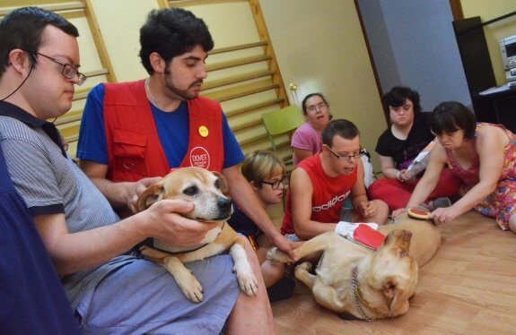 El perro que salvó a un niño con Síndrome de Down