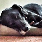 Enfermedades oculares más comunes en perros