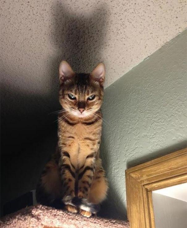fotos que demuestran el lado siniestro de los gatos