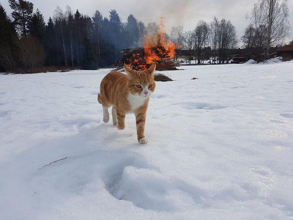 gato gangster