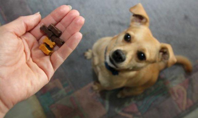 Golosinas sin gluten para perros celíacos