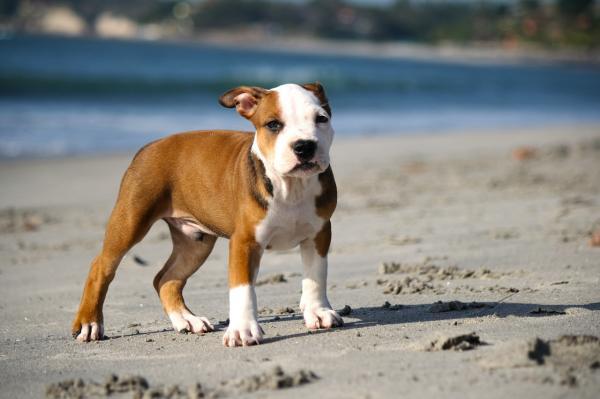 Tratamiento de las encías sensibles en los perros