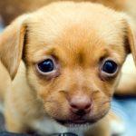 La alimentación de los perros cambia en función de su edad