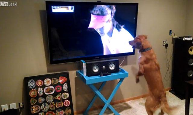 La visión de un perro es diferente a la nuestra